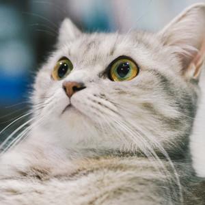556cf3aa043223f7b8d3eeec507aca440b360263 a cat looked surprised t20 0azzk9